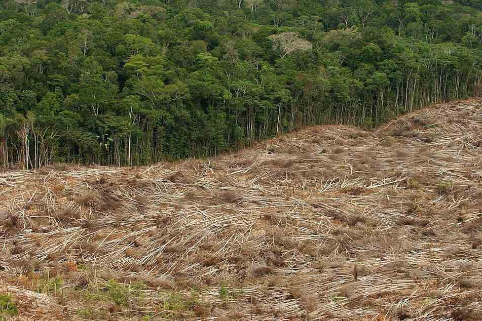 The deforestation of the Amazon is one of the most pressing climate issues of today.