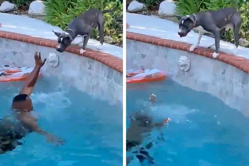 Auf Twitter veröffentlichte der amerikanische Hundebesitzer ein Video seiner folgenschweren Idee.