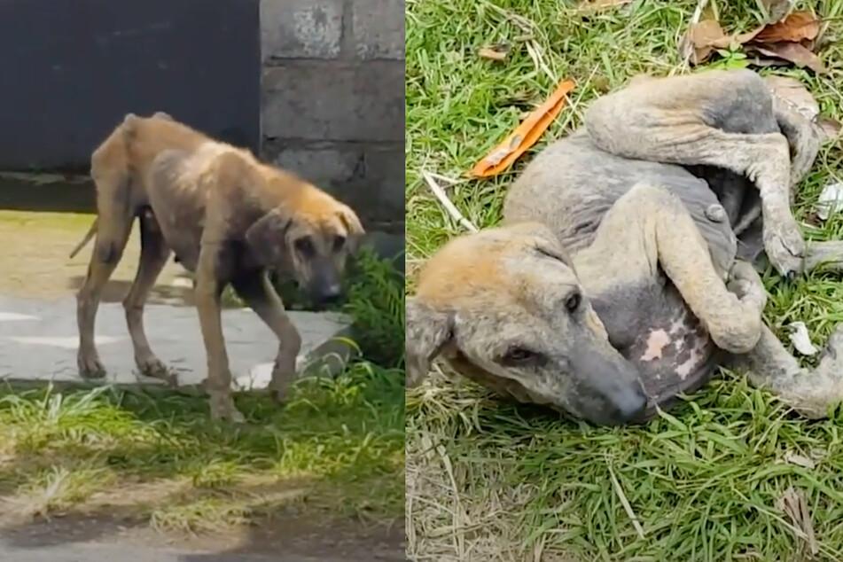 Frau braucht 30 Tage, um hilflosen Hund von der Straße zu retten