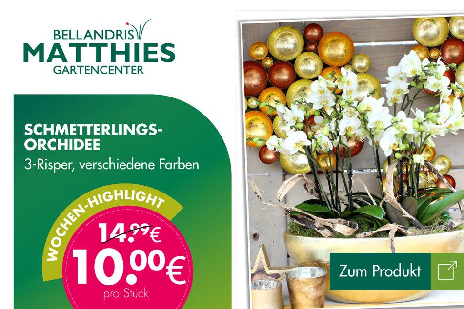 Schmetterlings-Orchidee für 10 Euro.
