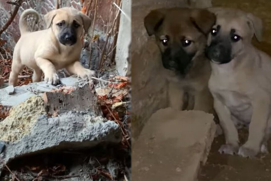 Puppies hide in fear after seeing what happened to their mother