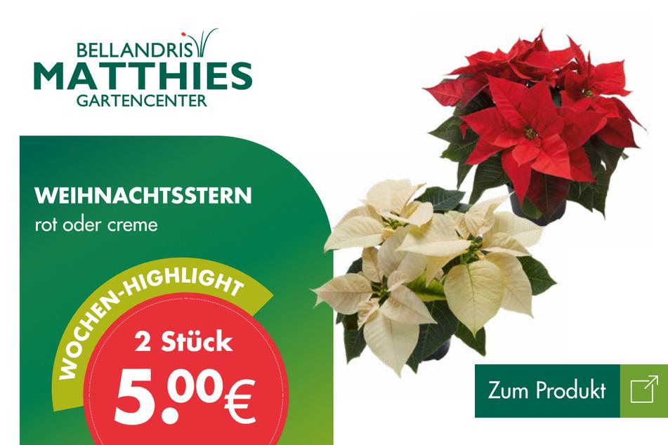 Weihnachtssterne für 5 Euro.