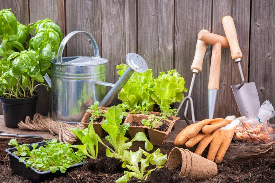 Urban Gardening: Probiert's mal mit eigenem Gemüse auf dem Balkon
