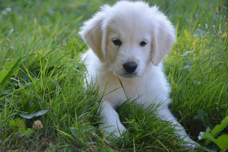 Durchfall bei Hunden: Natürliche Hilfe gibt es jetzt in der Apotheke