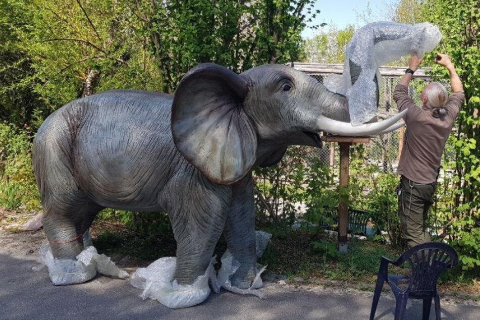 Tiergartenleiter Christian Schroller packt den Neuzugang für den Zoo der Minis in Aue aus.