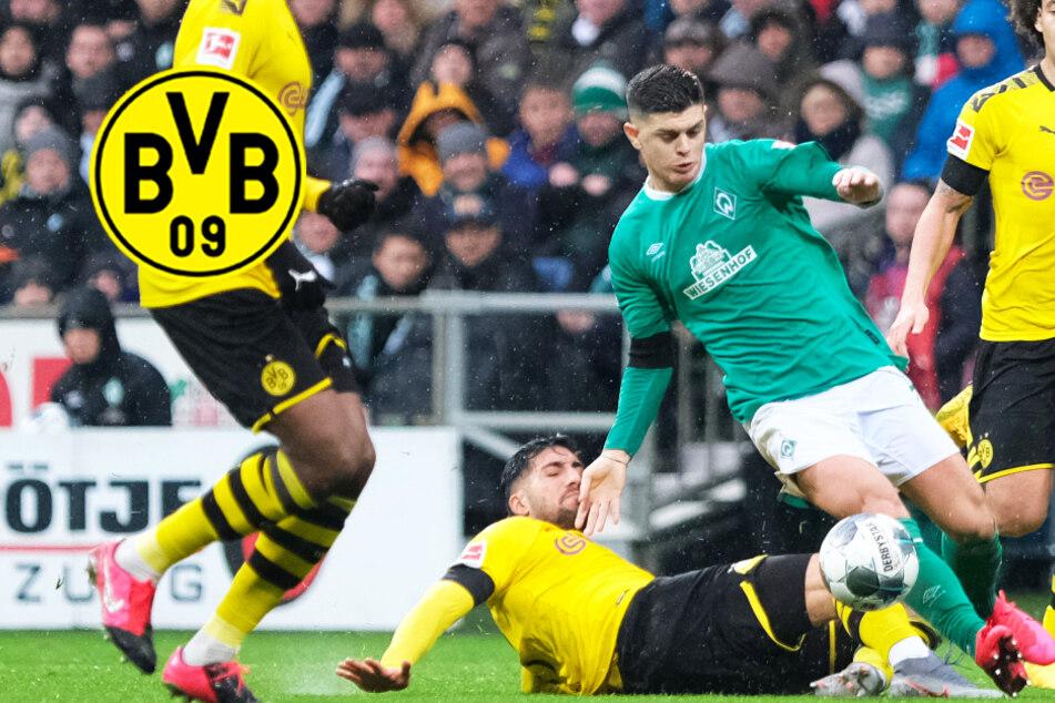 BVB soll Kontakt zu Rashica aufgenommen haben! Kommt Bremen-Star im Sommer?