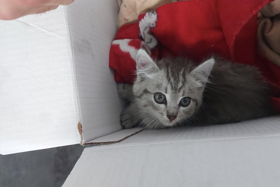 Noch mal Glück gehabt! Kätzchen fährt unbeschadet 600 Kilometer im Radkasten mit