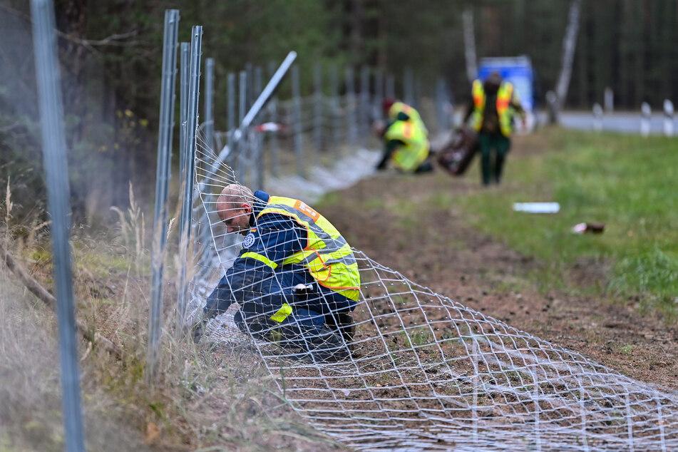 Knapp 56 Kilometer Schutzzaun wurden innerhalb weniger Wochen entlang der sächsisch-polnischen Grenze errichtet.