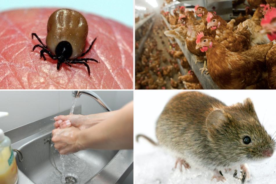 München: Wenn Tiere krank machen: Diese Gefahren drohen dem Menschen