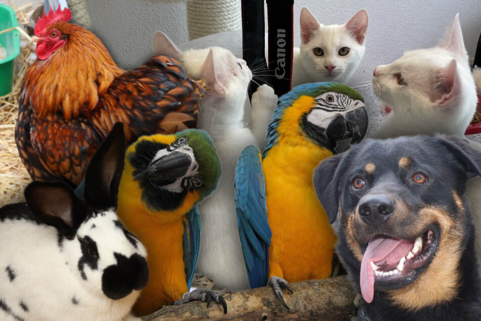 9 besondere Tiere: Diese Hunde, Katzen und mehr wünschen sich neue Besitzer