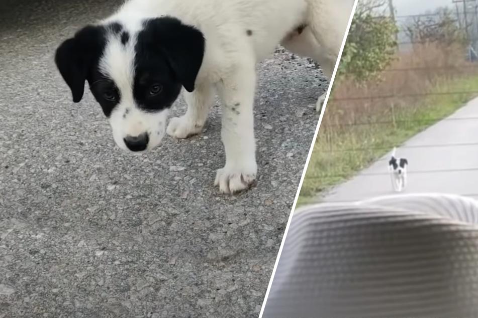 Streunender Hund will gerettet werden und rennt Auto hinterher