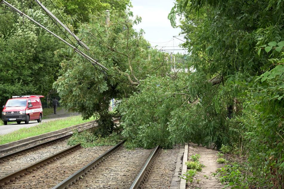 Bäume stürzten auf die Gleise in Chemnitz-Schönau.