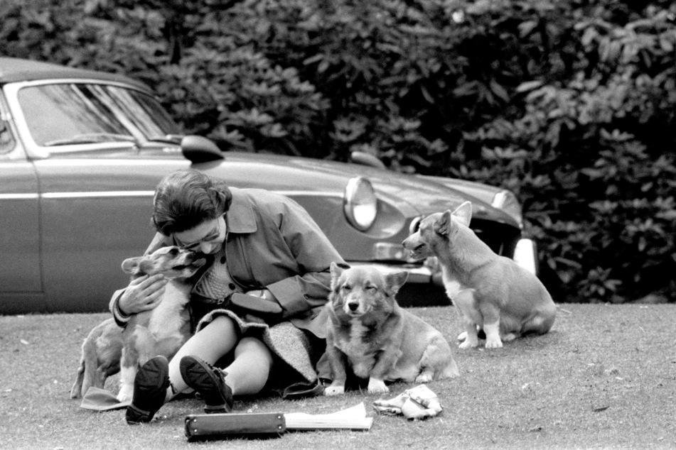 Dieses Bild stammt aus dem Jahr 1973: Die damals 47-jährige Elizabeth verbrachte schon immer gerne Zeit mit ihren geliebten Corgis.