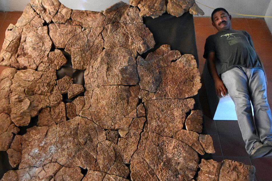 Der venezolanische Paläontologe Rodolfo Sánchez liegt neben dem Panzer eines Stupendemys geographicus Männchens, der in 8 Millionen Jahre alten Ablagerungen in Venezuela gefunden wurde.
