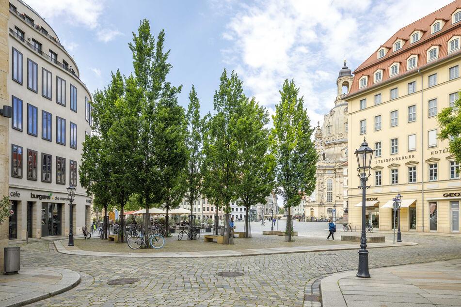 Rund 54.500 Straßenbäume gibt es in Dresden, die im Sommer genügend Wasser brauchen, um nicht zu vertrocknen.