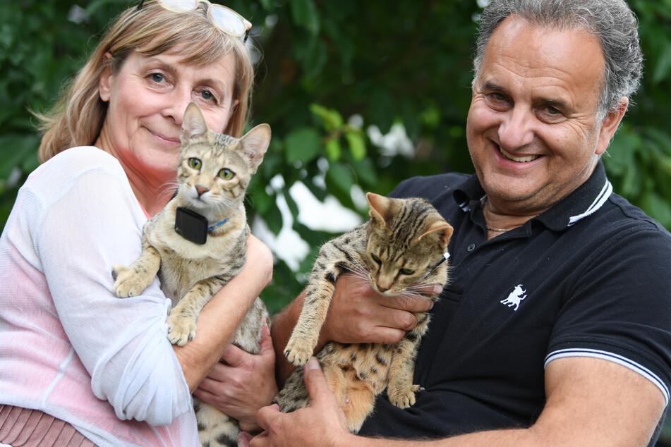 """Sabine Haus und Angelo Kamm, Züchter von Savannah-Katzen, halten im Garten ihres Hauses die beiden Katzen """"Dafna"""" (l.) und """"Dafina""""."""