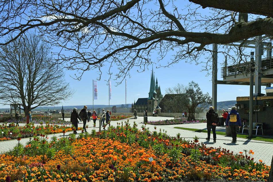 Besucher laufen auf dem Petersberg über das Gelände der Bundesgartenschau.
