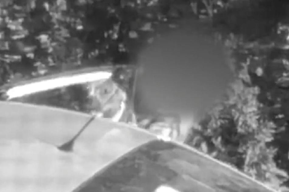 Wenn der anonyme Zeuge das Video nicht an die Tierschützer geschickt hätte, würde Nedis Albtraum wohl noch eine Weile weitergehen.