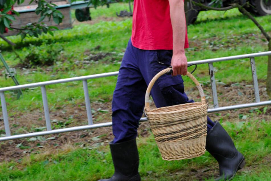 Von Leitern geht für Landwirte offenbar ein großes Risiko aus. (Symbolbild)