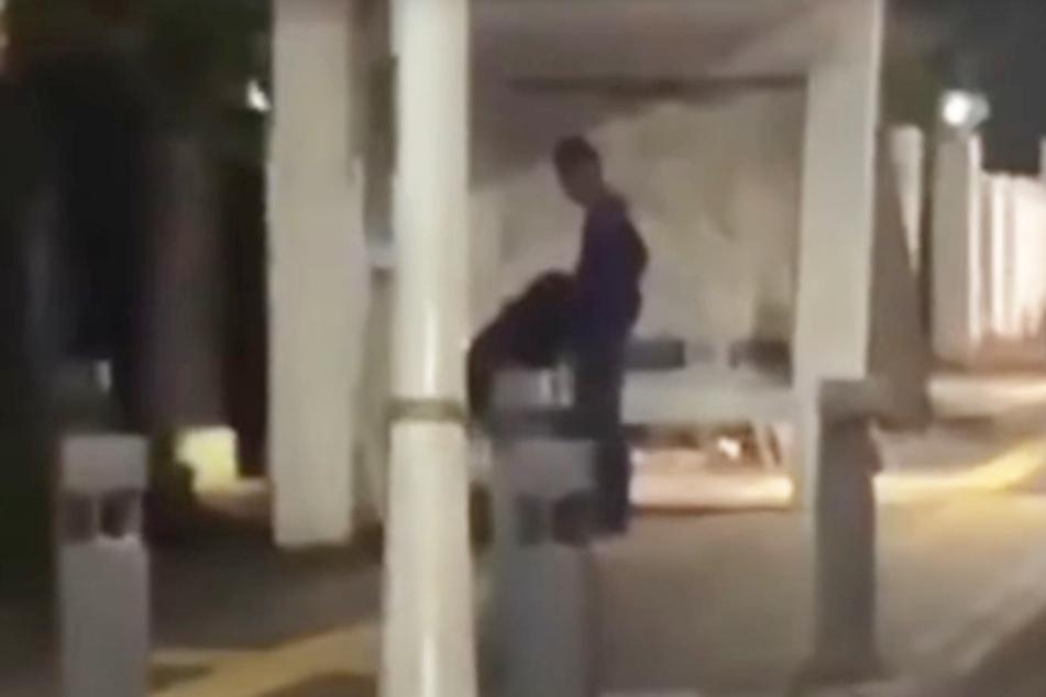 Recht eindeutige Bilder: Hier bekam ein Mann augenscheinlich einen Blowjob an der Bushaltestelle.