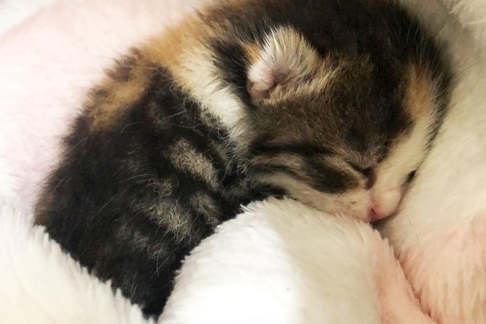 Tragischer Unfall: Katze stirbt auf offener Straße, ihr Baby versteht es nicht