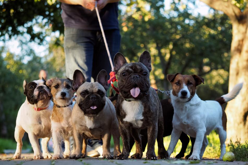 Ein Mexikaner rettete unglaublich viele Hunde vor dem sicheren Tod. (Symbolbild)