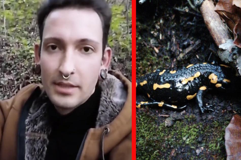 Der 29-Jährige entdeckte einen Feuersalamander.