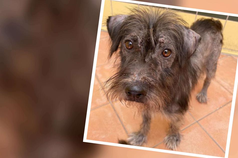 Hund mit Hautkrankheit wartete vergeblich auf Interessenten: Nun soll sich das Blatt wenden