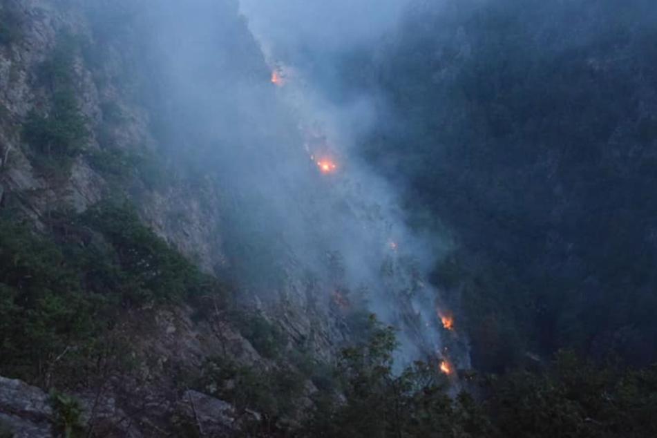 Beliebtes Ausflugsziel in Flammen: Feuerwehreinsatz an der Roßtrappe