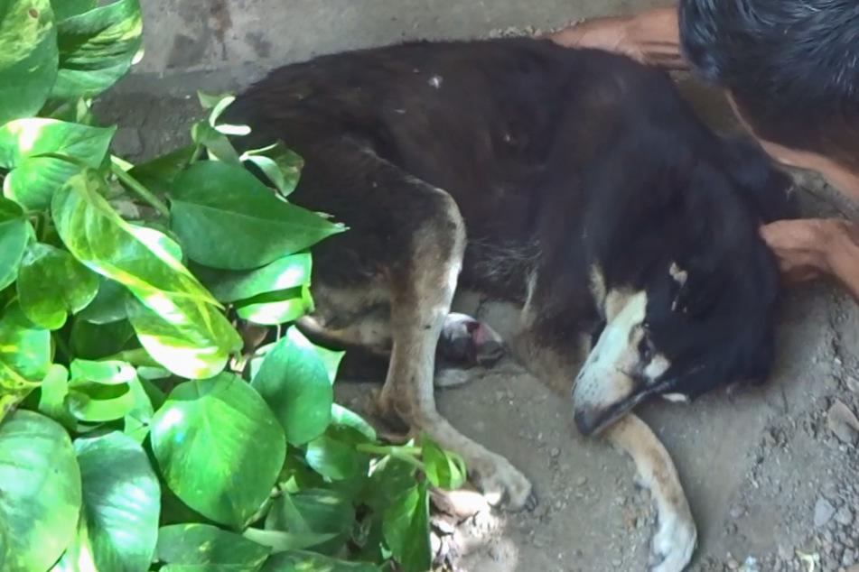Einsamer, kranker Hund hat keine Hoffnung mehr, als doch noch jemand Herz zeigt