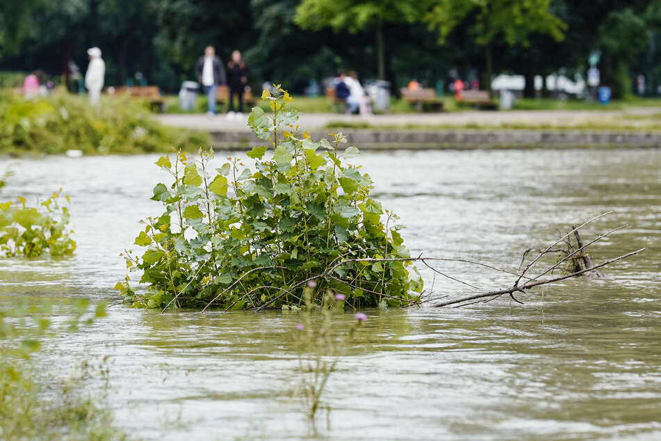 Der Rhein führt nach all dem Regen Hochwasser.