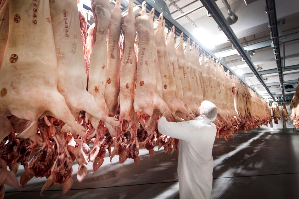 Schweine hängen in einem Kühlhaus des Fleischunternehmens Tönnies. Nach vier Wochen Zwangspause hat der Schlachtbetrieb seine Produktion wieder hochgefahren. (Archivbild)