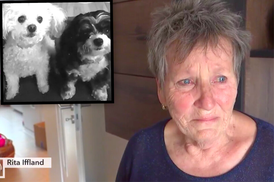 Leipzig: Trauer in Sachsen: Rita (77) über den Tag, an dem ihre geliebten Hunde totgefahren wurden