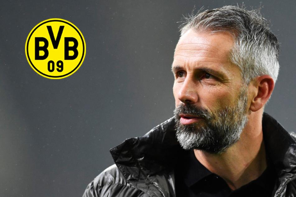 BVB-Wunschkandidat: Wird Marco Rose der teuerste Trainer-Transfer der Bundesliga?