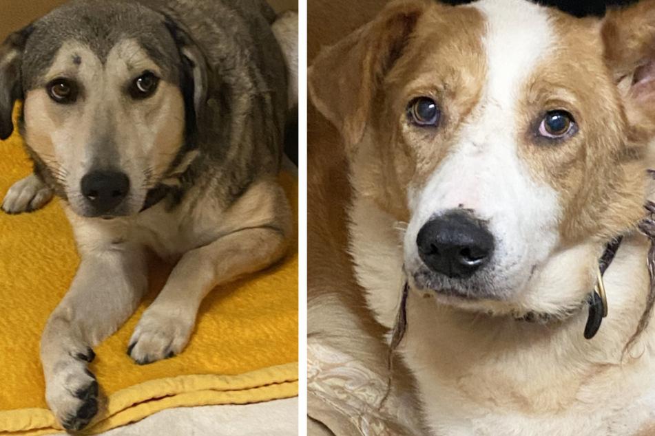 Zwei der insgesamt 50 geretteten Tiere. Das Tierheim bittet um Spenden für die Hunde und Katzen.