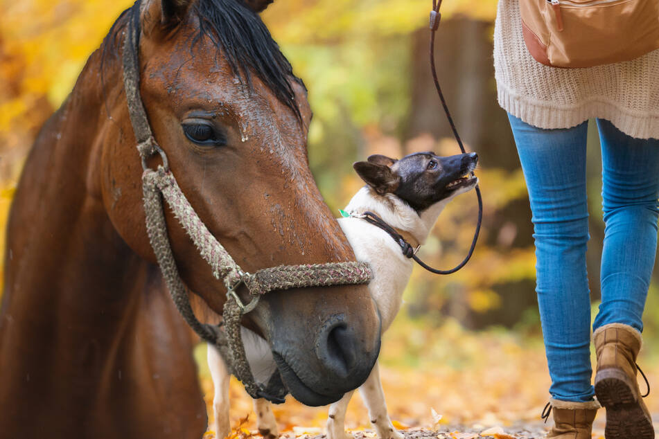 Frau geht mit Hund Gassi und sieht kräftigen Mann: Was der mit Pferd anstellen will, ist ekelerregend