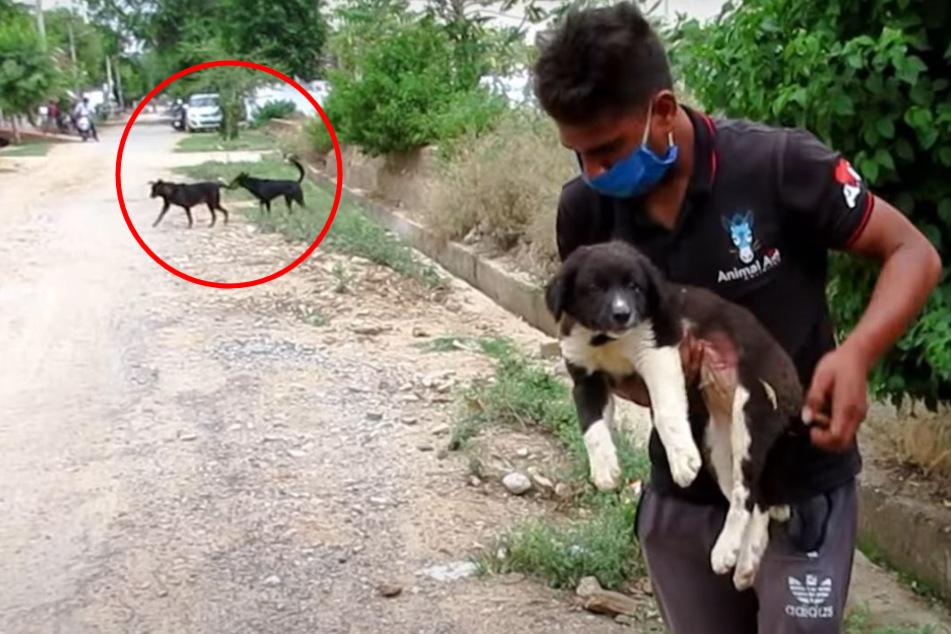 Tierschützer retten Hund, doch der hat andere Sorgen