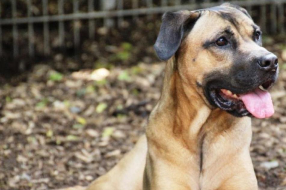 Herzens-Hund Lorena sucht Herzens-Mensch