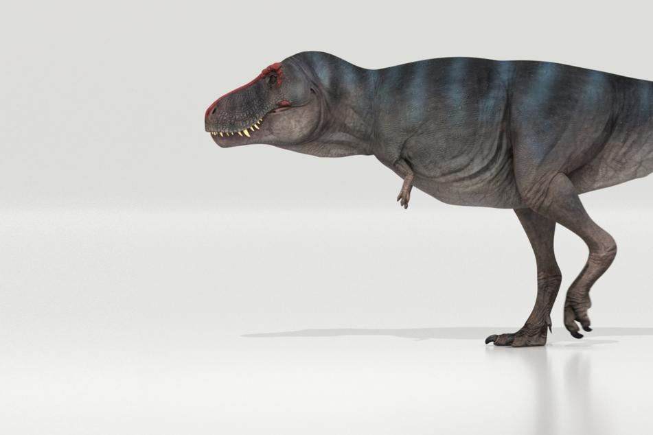 Wie schnell lief ein T-rex? Ein Mensch hätte ihn wohl abhängen können!