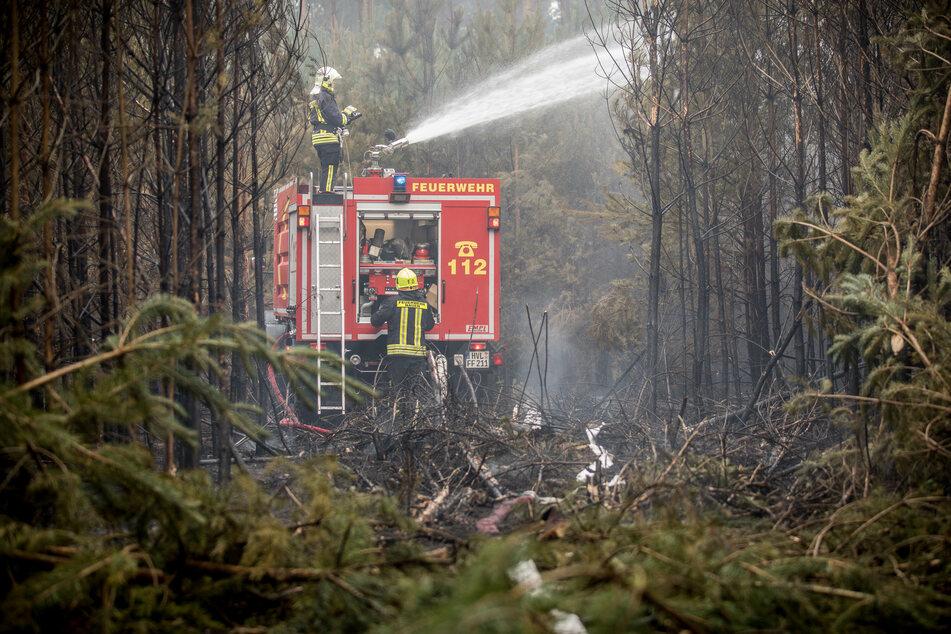 Feuerwehrmänner bekämpfen zwischen eng stehenden Bäumen einen Waldbrand bei Treuenbrietzen (Archivbild).