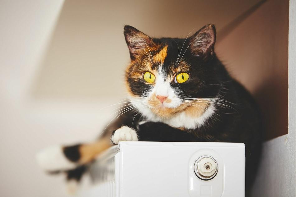 Immer wieder passiert es, dass Katzen auf der Heizung mit ihren Krallen an der Abdeckung hängen bleiben.