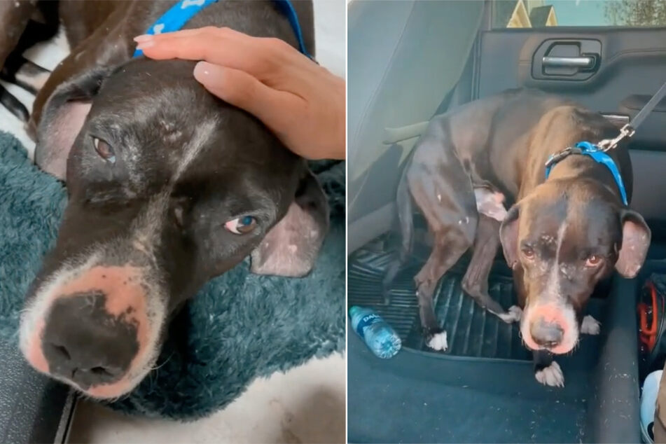 TikTok user rescues abandoned dog with a shocking past