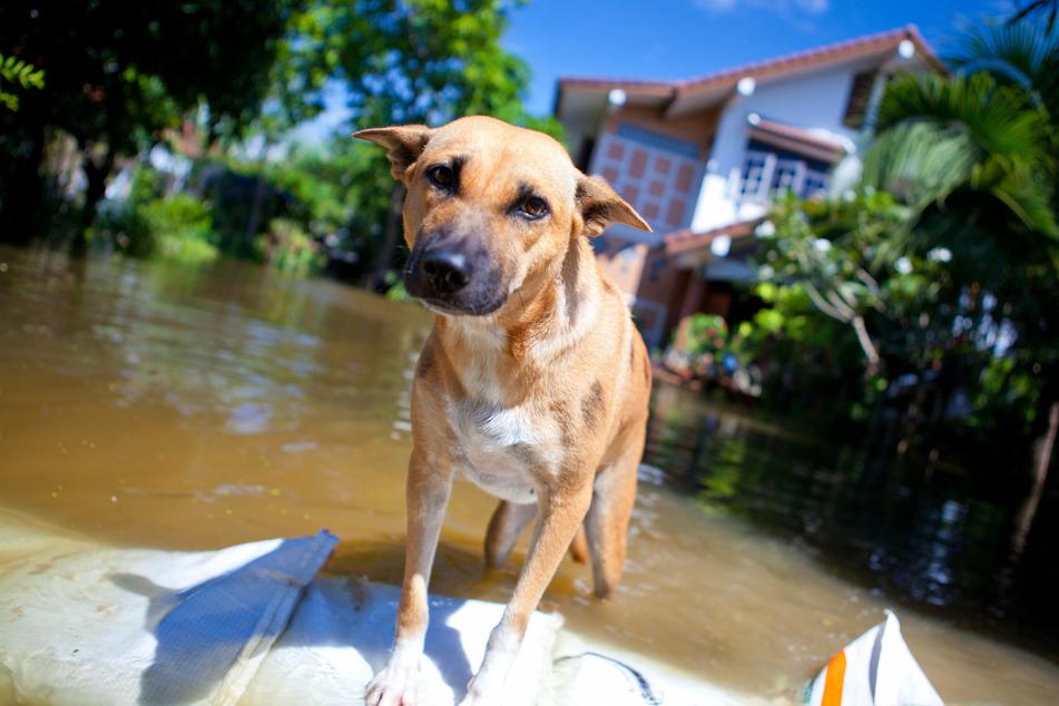 Neben den Menschen verloren auch zahlreiche Tiere bei der Flutkatastrophe ihr Zuhause - oder im schlimmsten Fall ihr Leben. (Symbolfoto)