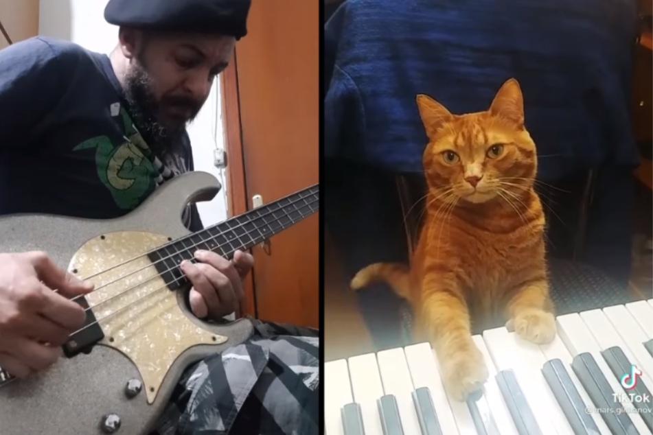Gitarrist traut seinen Ohren nicht, als er das Talent seiner Katze entdeckt
