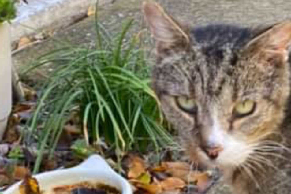 Cat disappears without a trace for six years, but then something miraculous happens