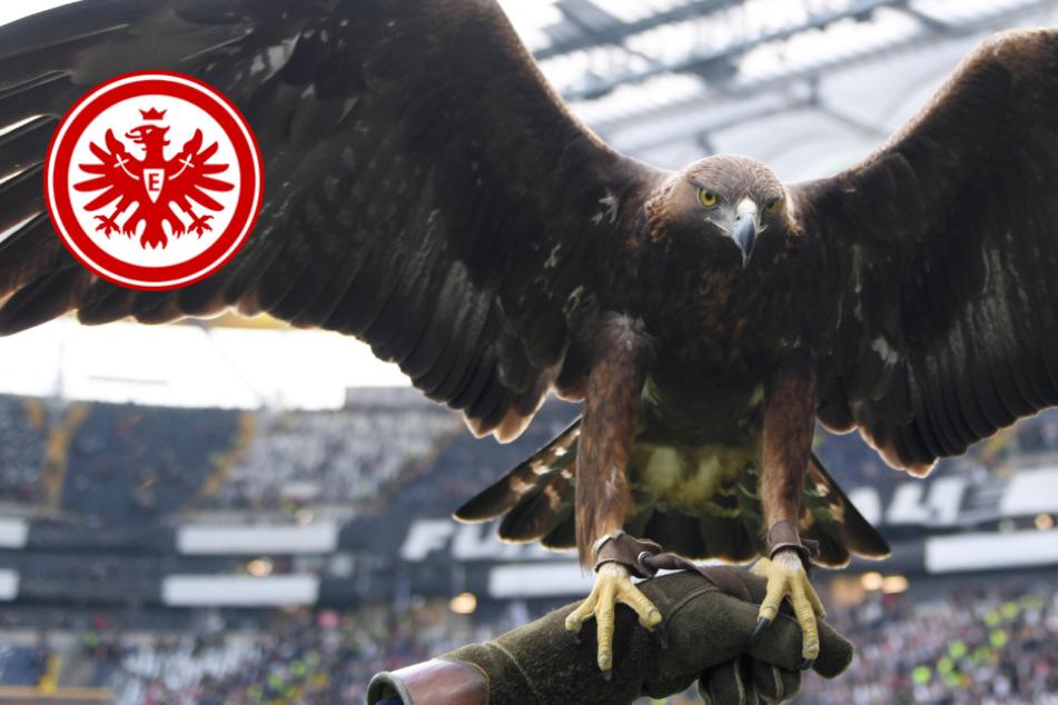 """Eintracht Frankfurt feiert wichtigen Geburtstag: """"Alles Gude, Attila!"""""""