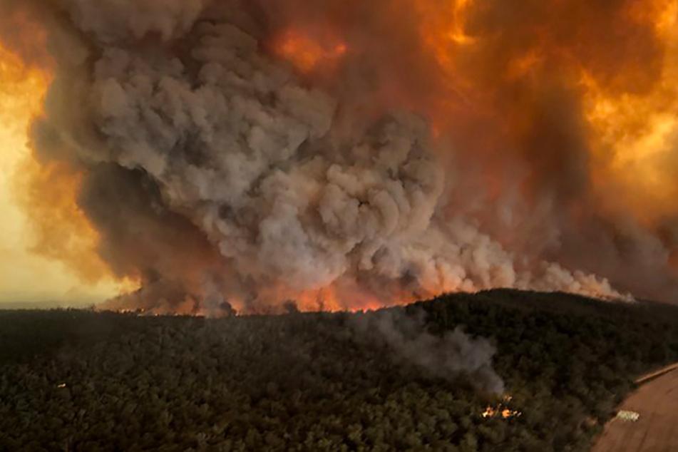 Extreme Hitze in Australien führt zu mehr als 50 Waldbränden