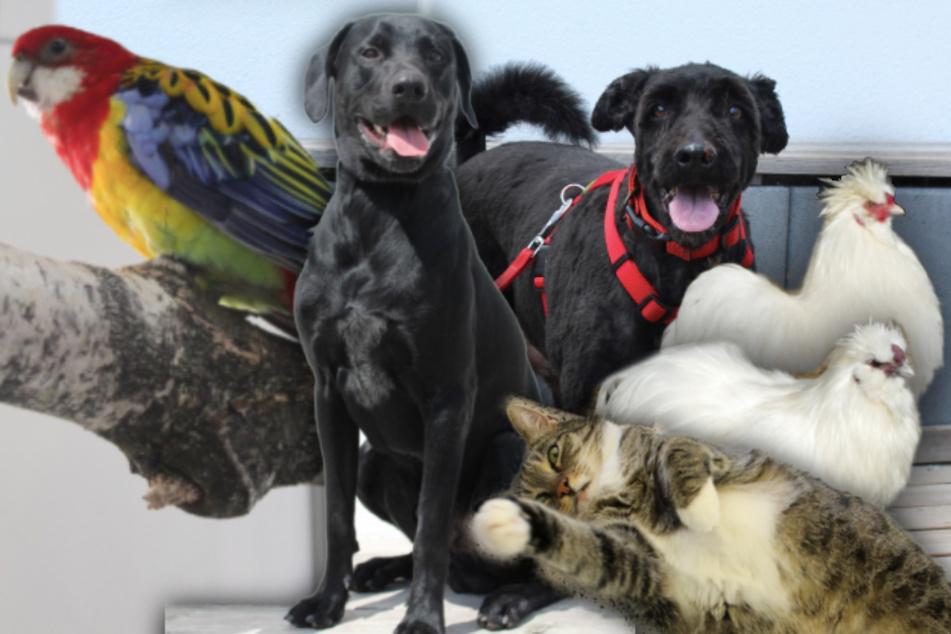 6 besondere Tiere: Diese Hunde, Katzen und Hühner suchen endlich ein Zuhause