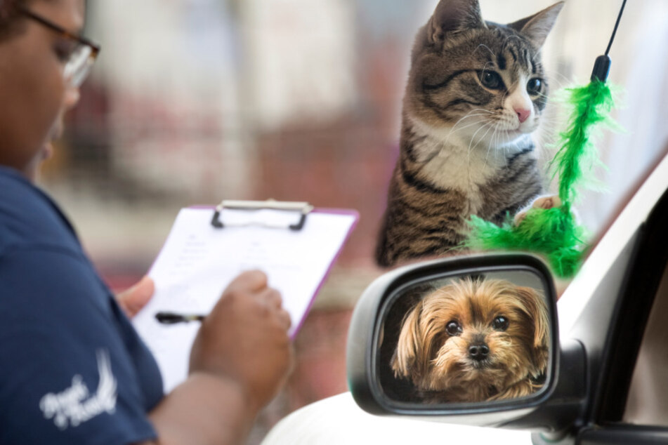 Hunde, Katzen und das Coronavirus: Was müsst Ihr beachten?