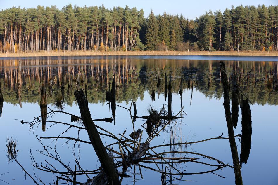 Der Mühlensee bei Speck im Müritz-Nationalpark.